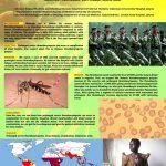 Prolong thrombocytopenia malaria ICMM